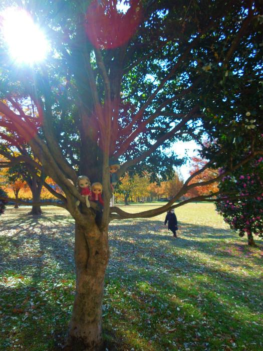 秋の公園19