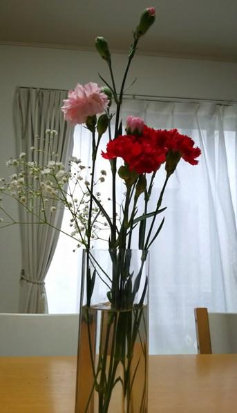 carnation6.jpg