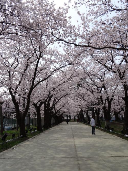 高田公園7