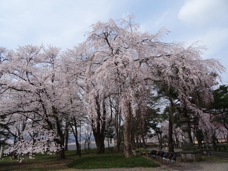 高田公園8