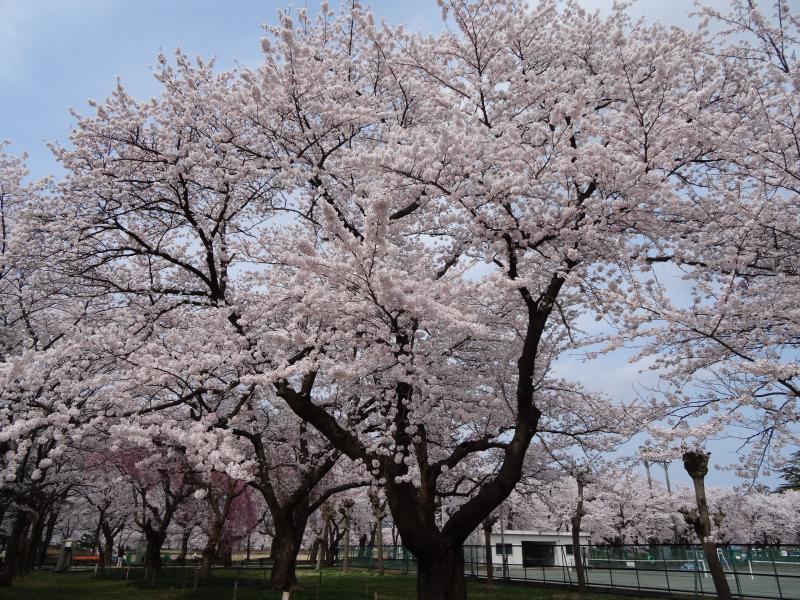 高田公園9