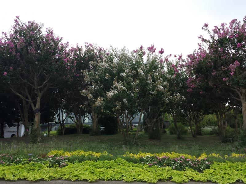 長居植物園8
