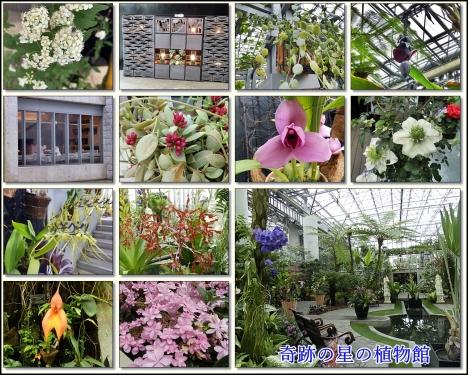 奇跡の星の植物館館内