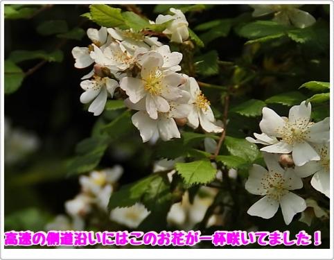 このお花が咲いていた