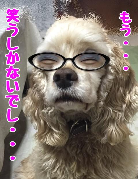 メガネのまな3