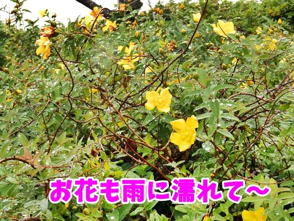 お花も雨に濡れて