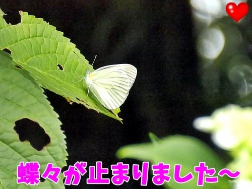 蝶蝶が止まりました