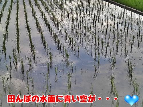 田んぼの水面に青い空が