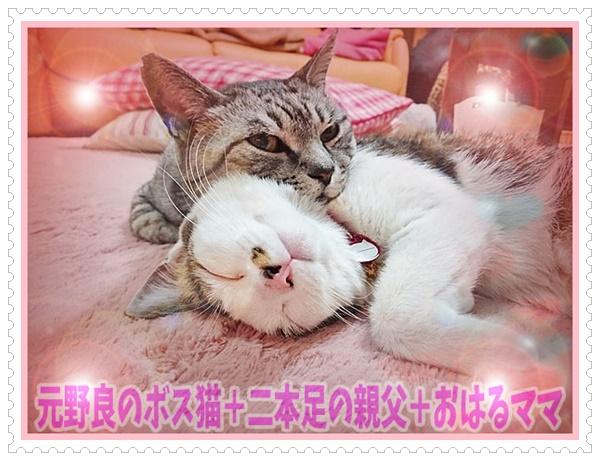 元野良のボス猫+二本足の親父+おはるママ
