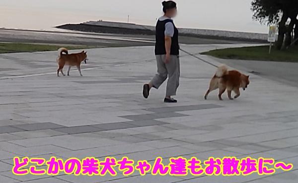 お友達の散歩