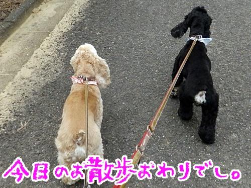 今日のお散歩おわりでし
