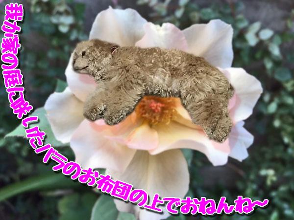 バラのおふとん