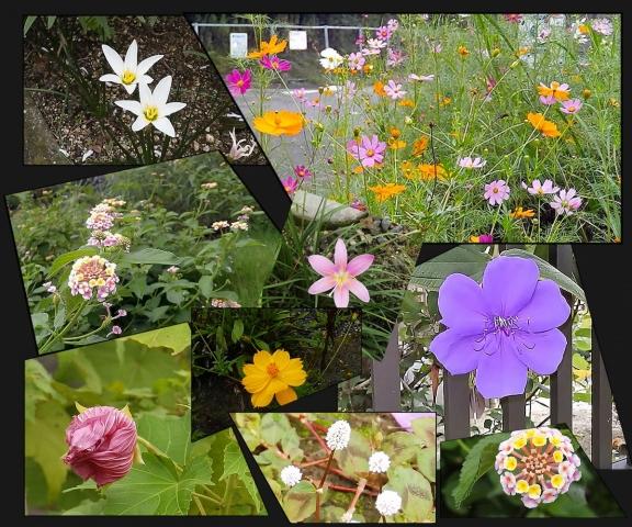 散歩道のお花たち1