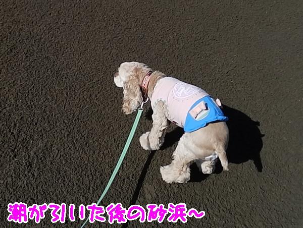 潮の引いた砂浜