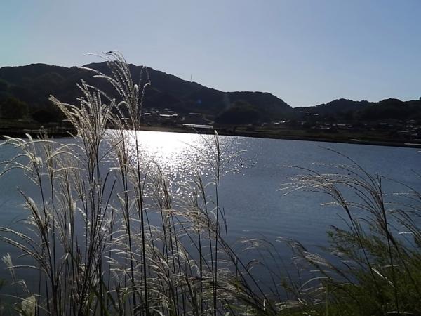 キラキラ水面