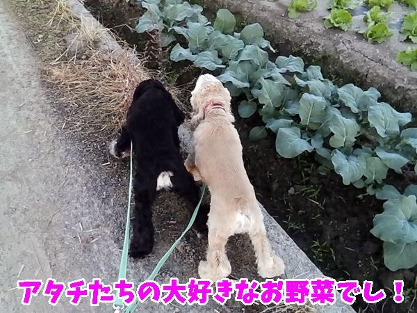大好きなお野菜