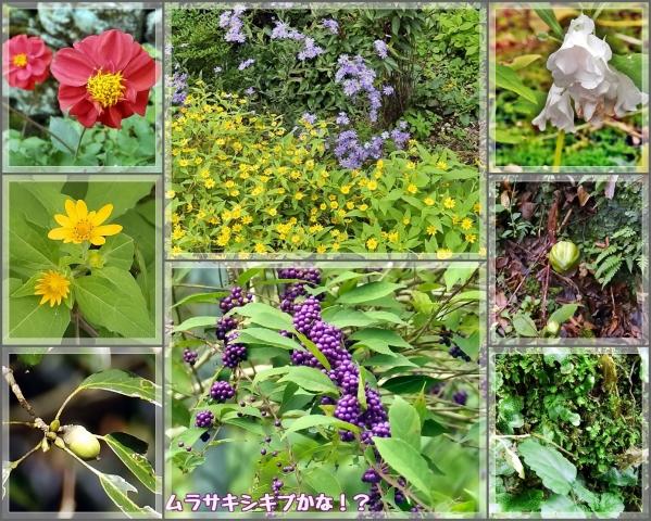 いろんな花たち