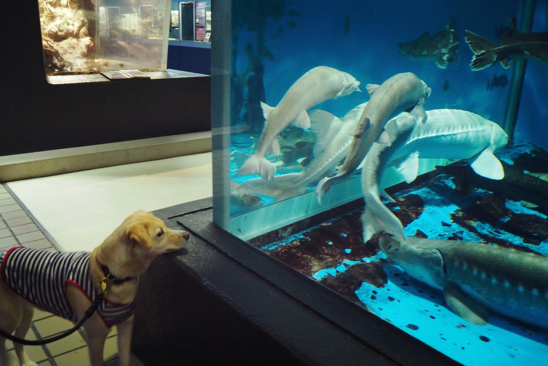 水族館 わんこ 犬 油壺