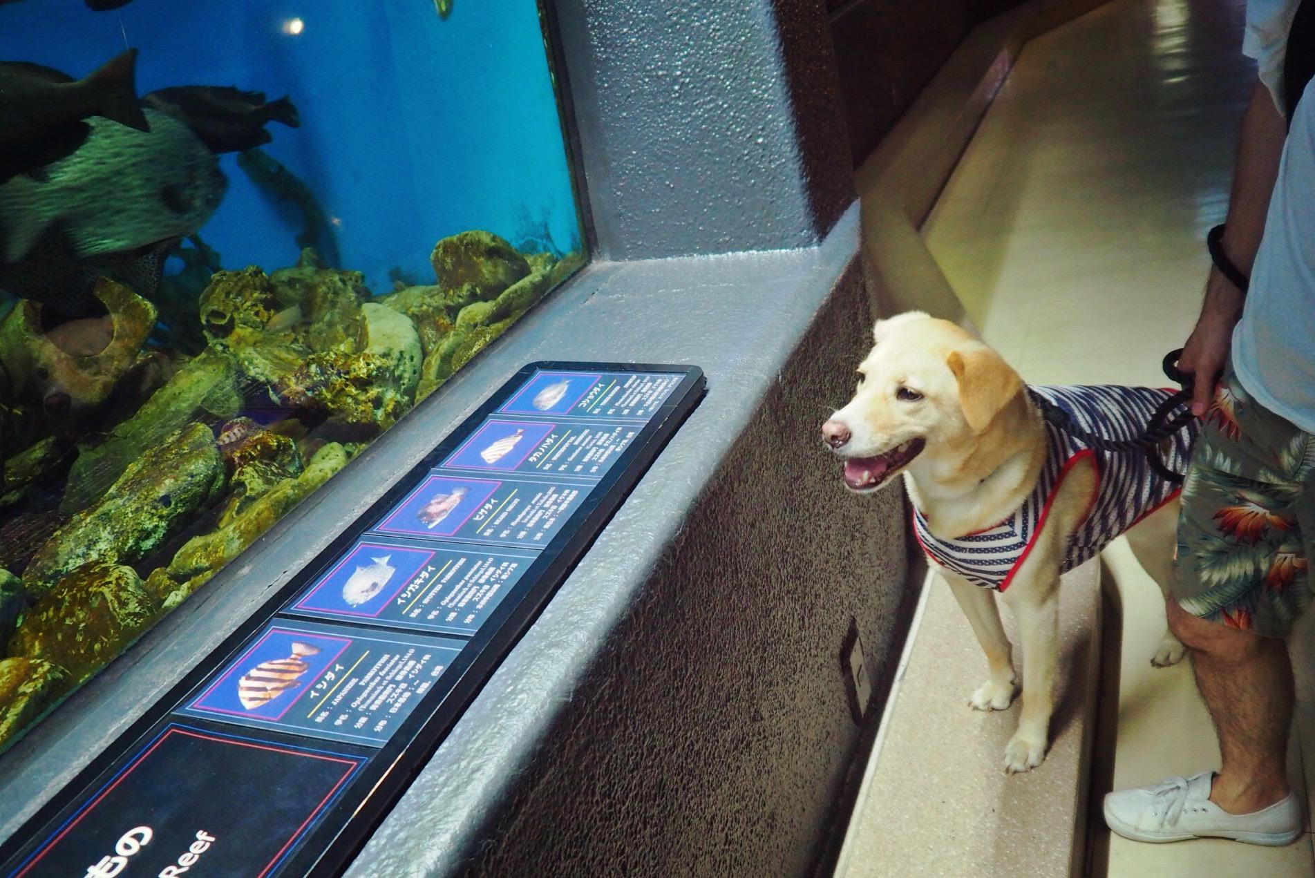 水族館 犬 わんこ 油壺