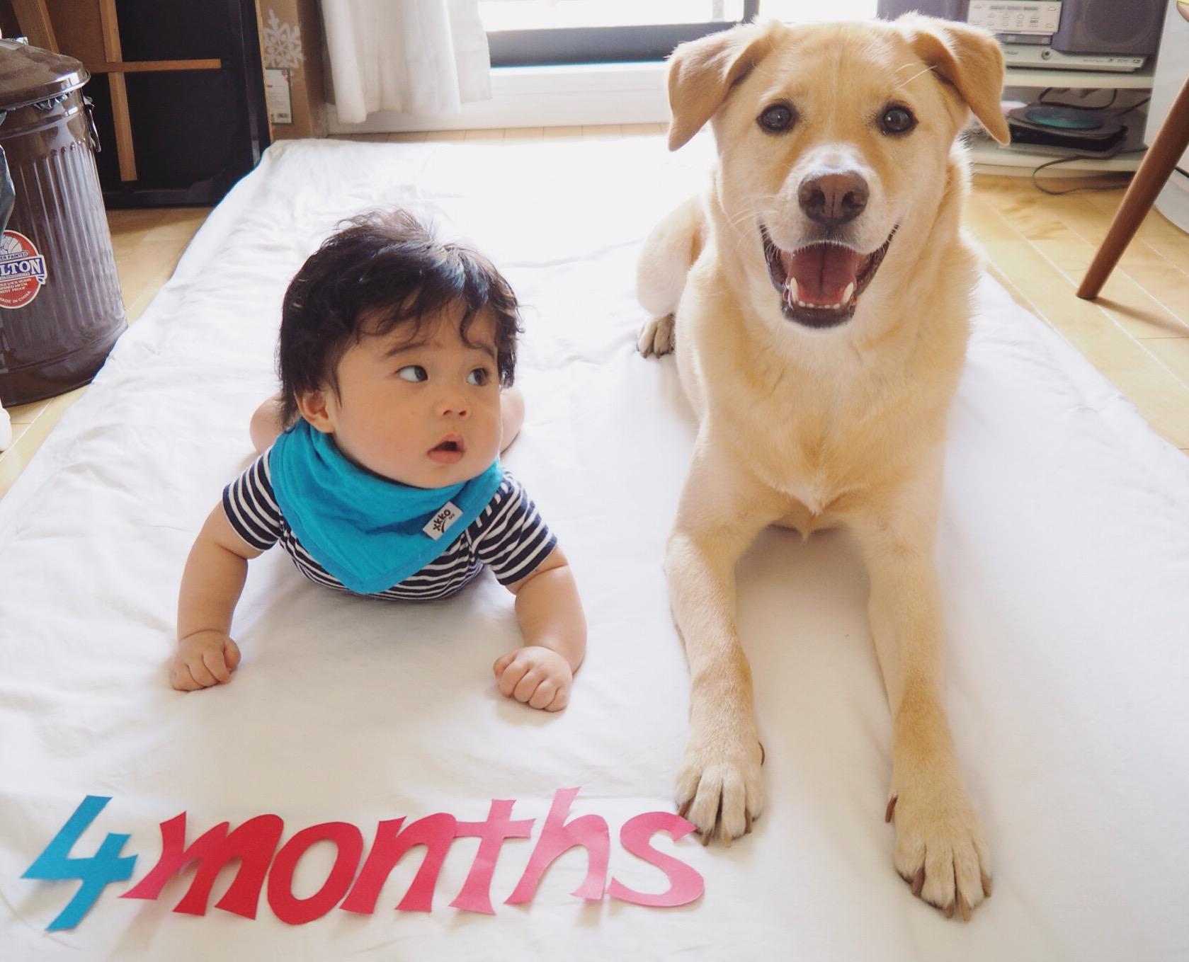 赤ちゃんと犬 犬と赤ちゃん