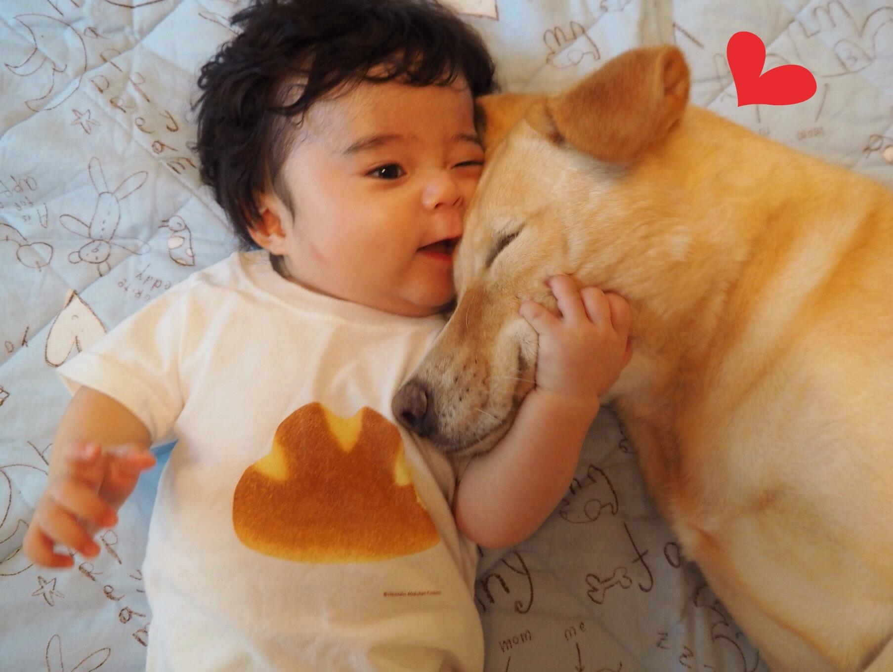 大型犬と赤ちゃん 赤ちゃんと大型犬 優しい