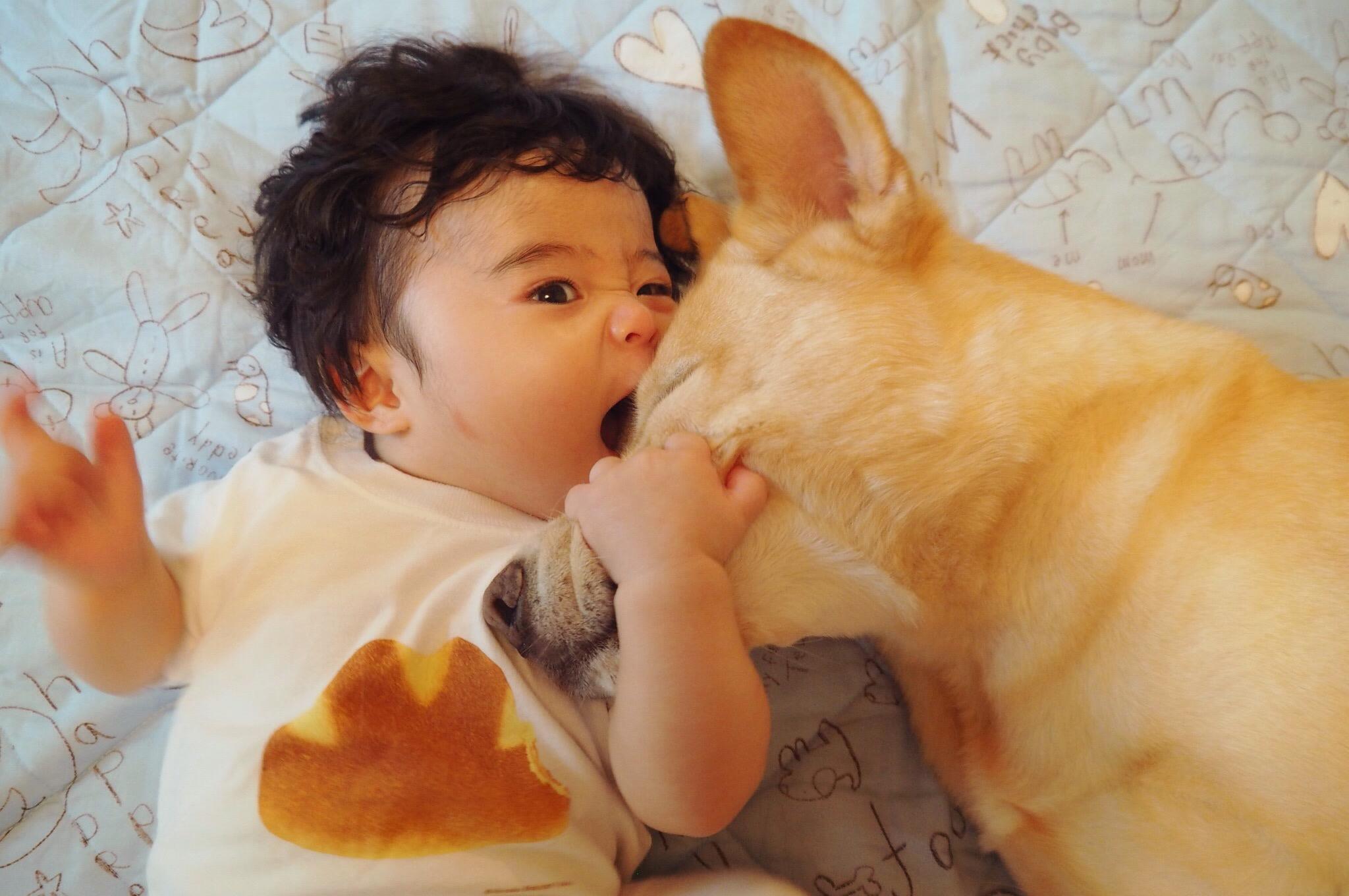 大型犬と赤ちゃん 赤ちゃんと犬 優しい