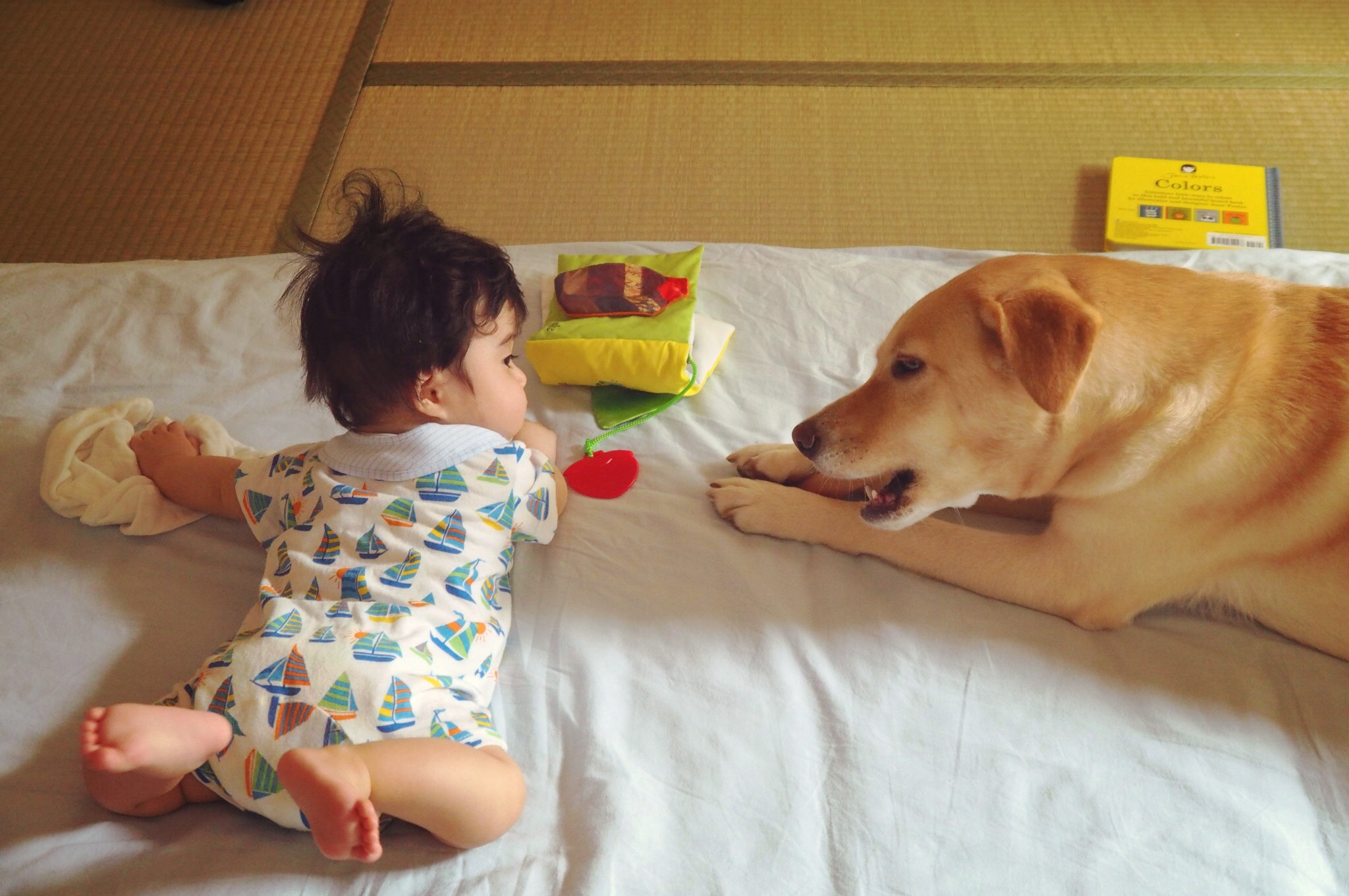 赤ちゃんと犬 犬と赤ちゃん 大型犬