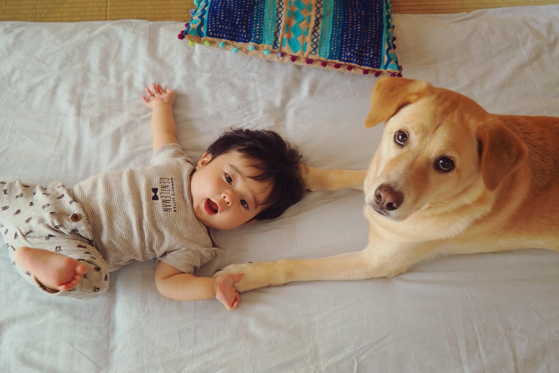 赤ちゃんと犬 犬と赤ちゃん 大型犬と赤ちゃん