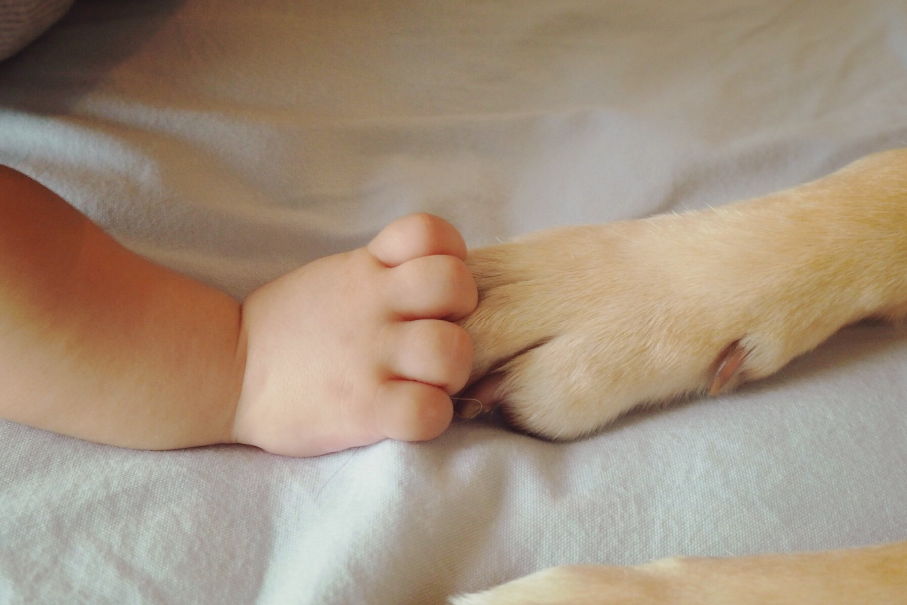 犬と赤ちゃん 赤ちゃんと犬 大型犬と赤ちゃん