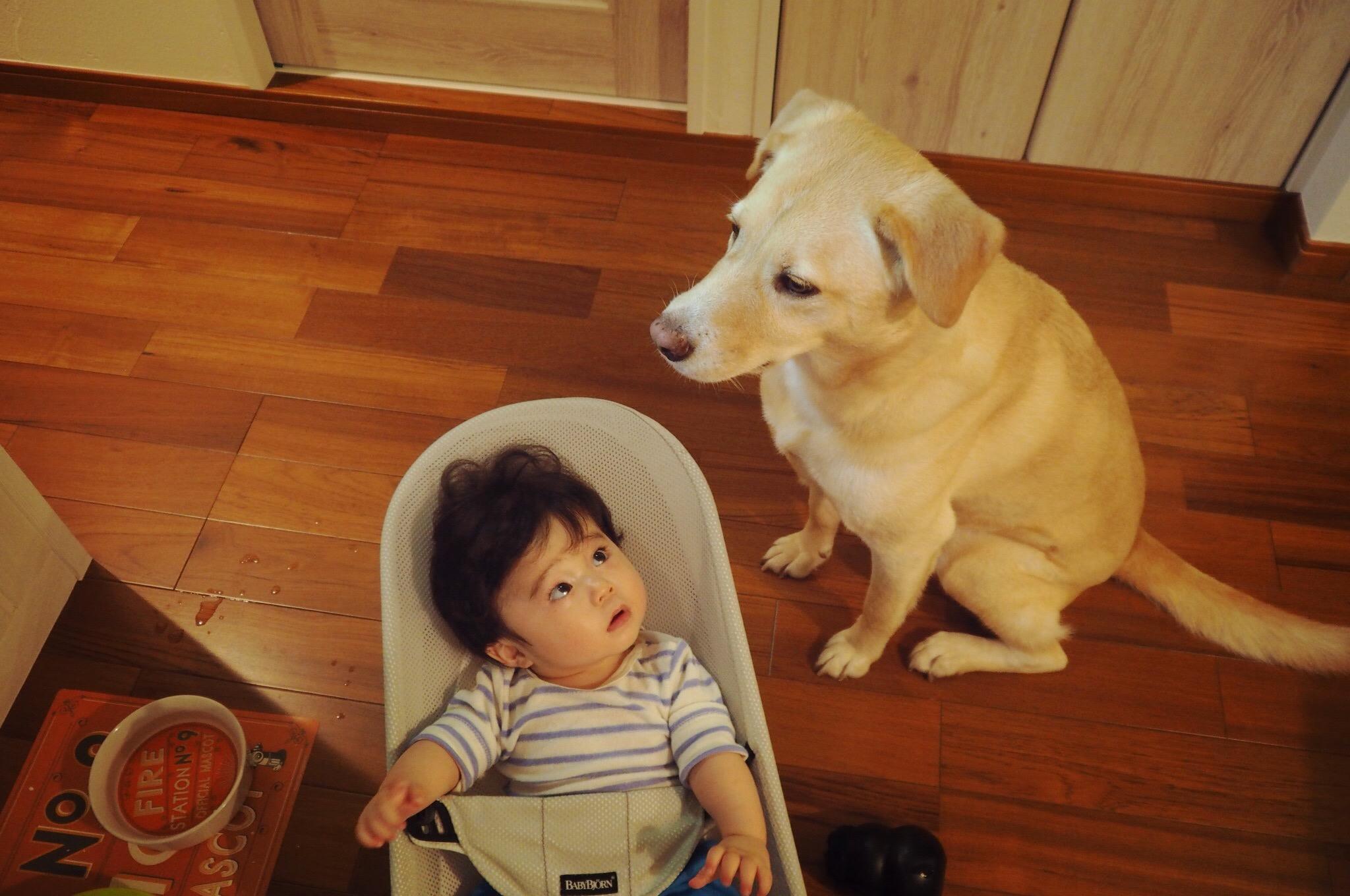 大型犬と赤ちゃん 犬と赤ちゃん