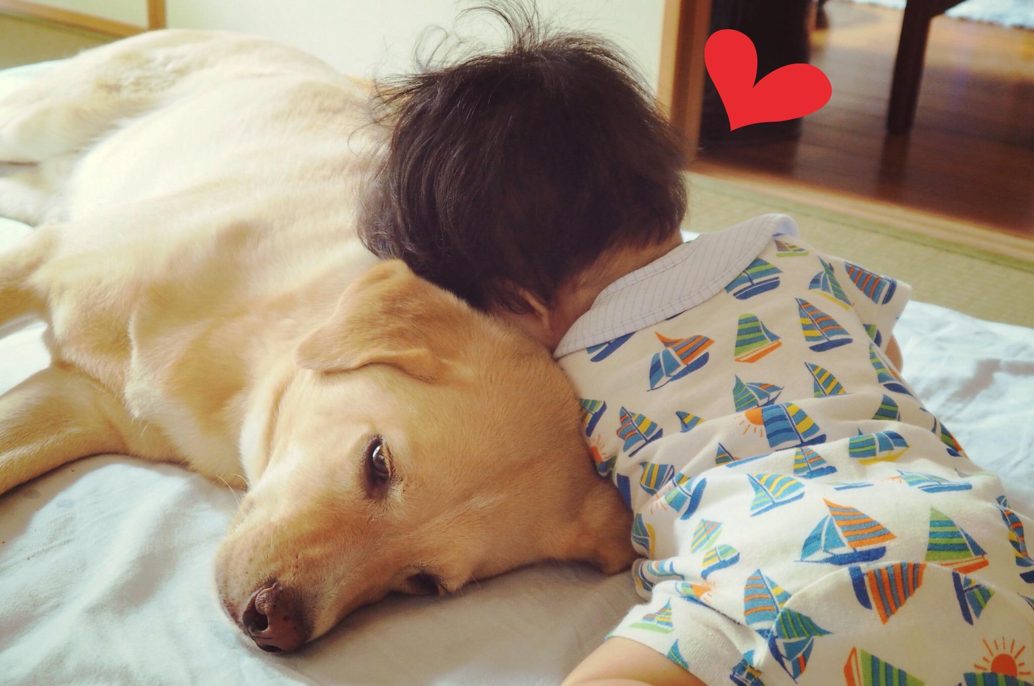 犬と赤ちゃん 赤ちゃんと犬 大型犬