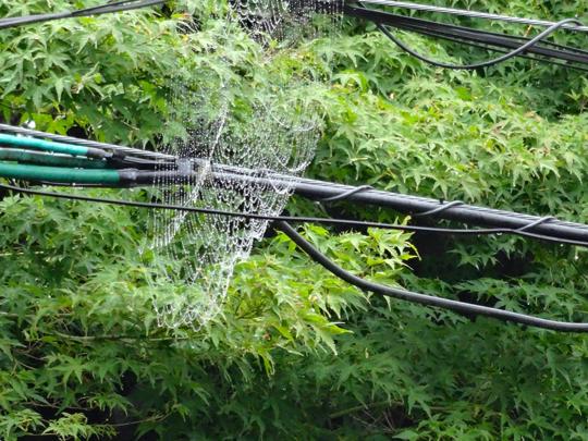 蜘蛛の巣 雨