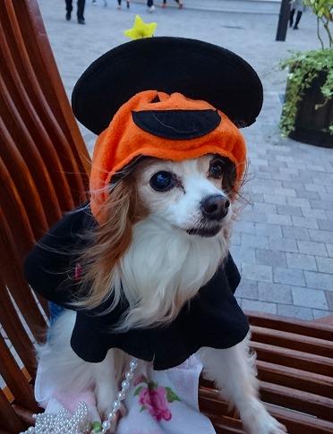 かぼちゃマント~~16.10.10