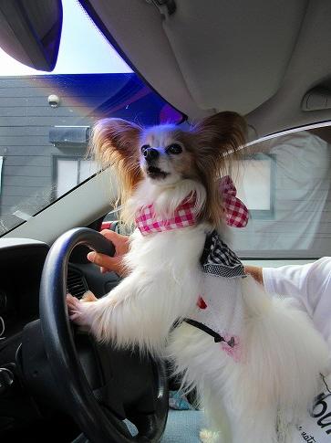 運転なう~