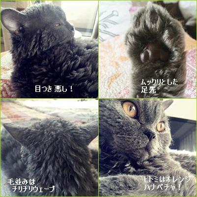 2016-10-11-6.jpg