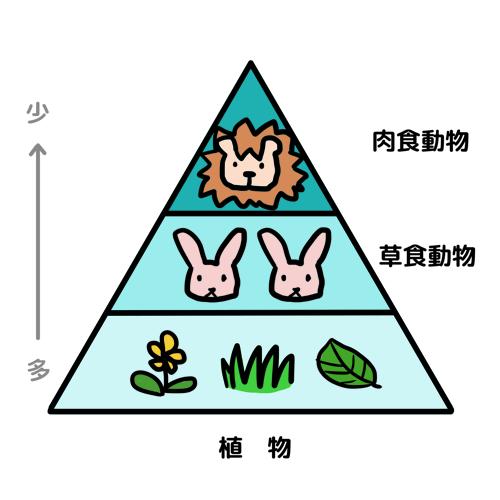 「生態系ピラミッド」の画像検索結果