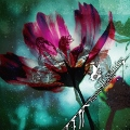 papilioeffectus_chrysalides.jpg
