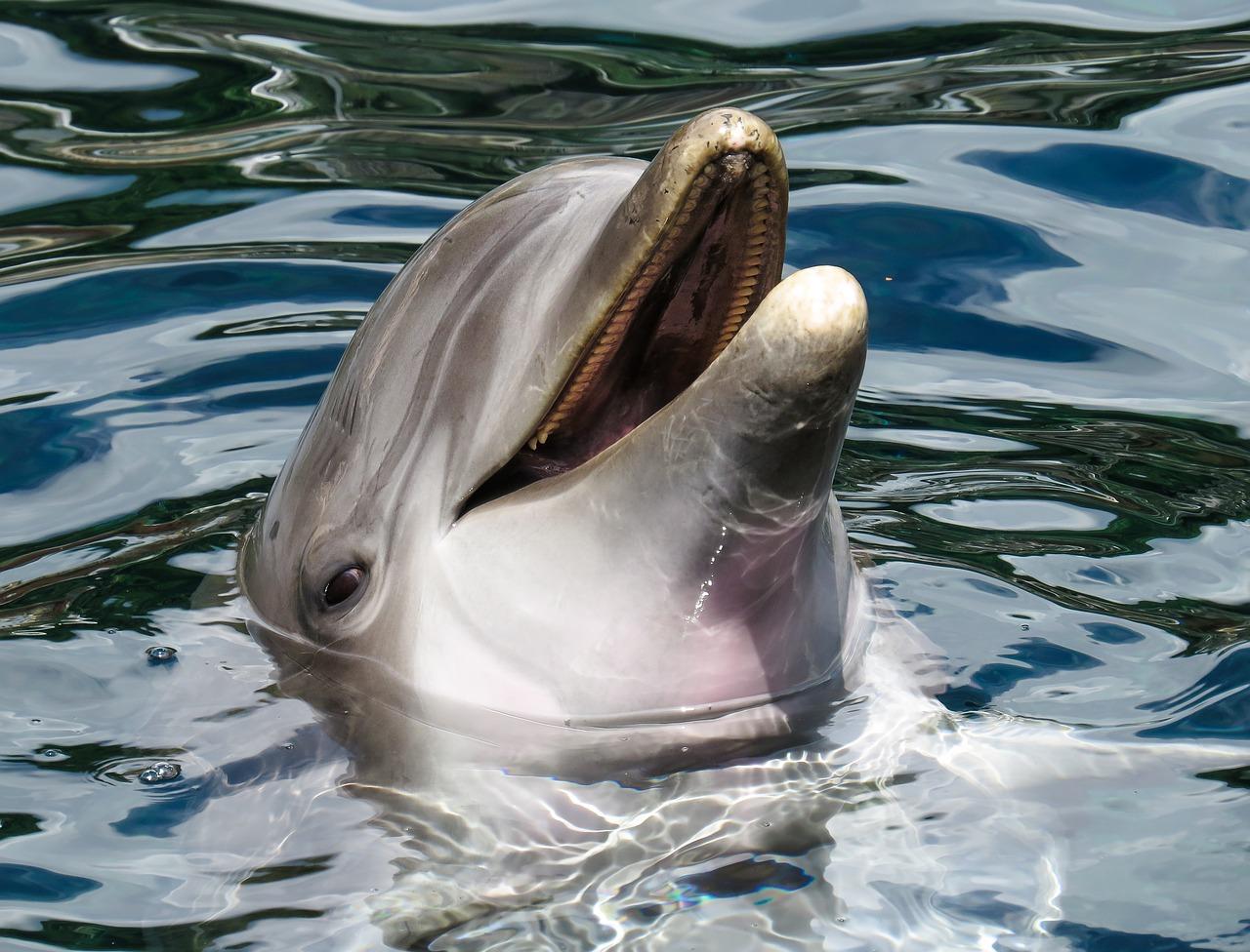 dolphin-1611509_1280.jpg