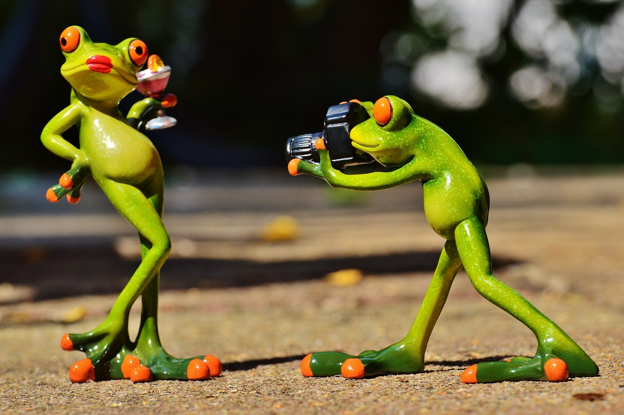 frog-881654_1280.jpg