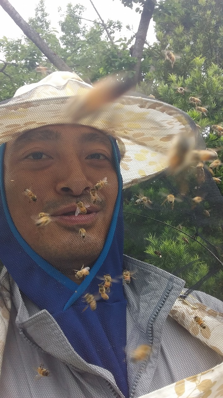 ミツバチにたかられる