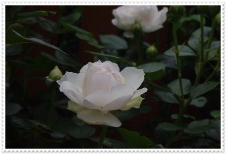 IMGP8452.jpg