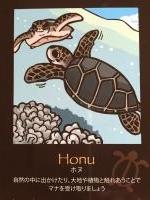 ホヌカード ウミガメ