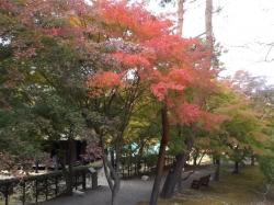20161104富士宮紅葉まつり6