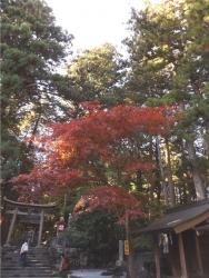 20161104北口本宮富士浅間神社6