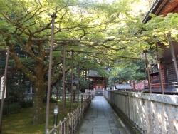20161104北口本宮富士浅間神社9