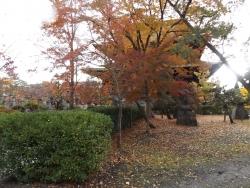 20161109善光寺8