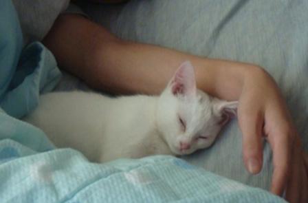 はじめてのお布団で寝るミコ