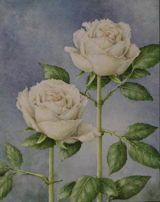 白バラ 1606