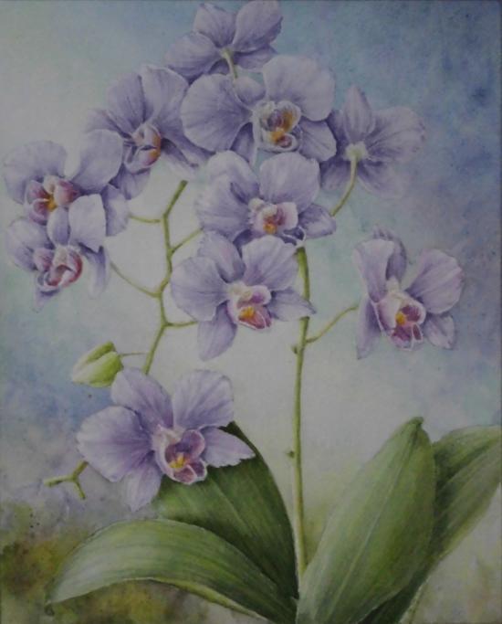 青紫の胡蝶蘭