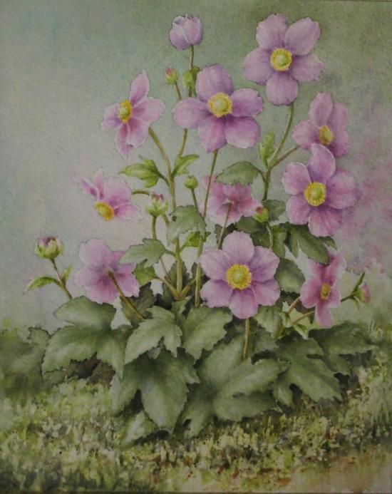 秋明菊 1611